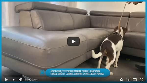 vidéo sur l'extermination des punaises de lit par la détection canine