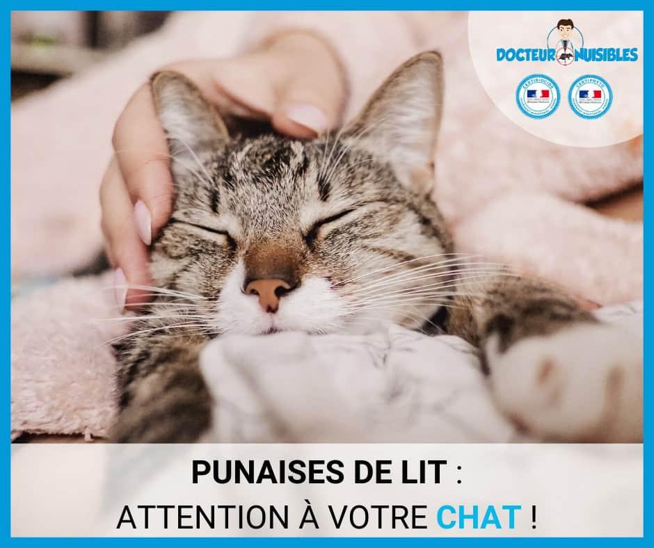Punaises de lit : attention à votre chat !